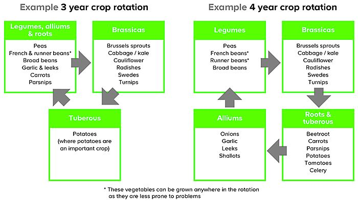 How to rotate your crops