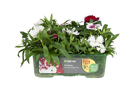 easyGrow plant packaging