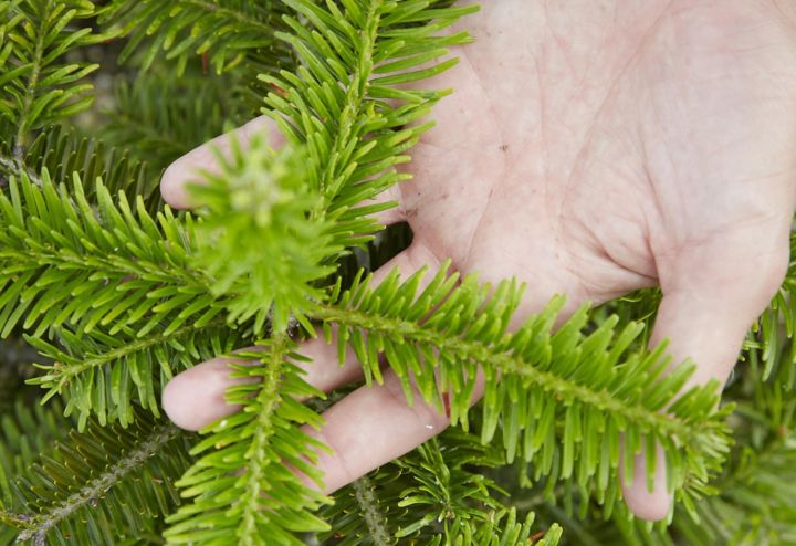 How To Care For A Real Christmas Tree Help Ideas Diy