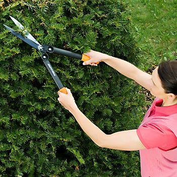 Pruning a tree