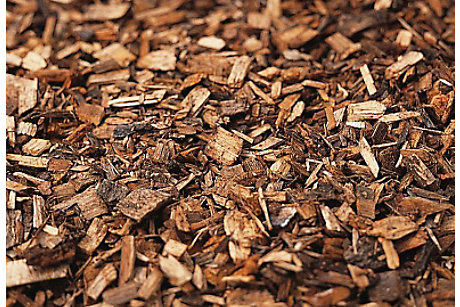 Bark chippings in the garden