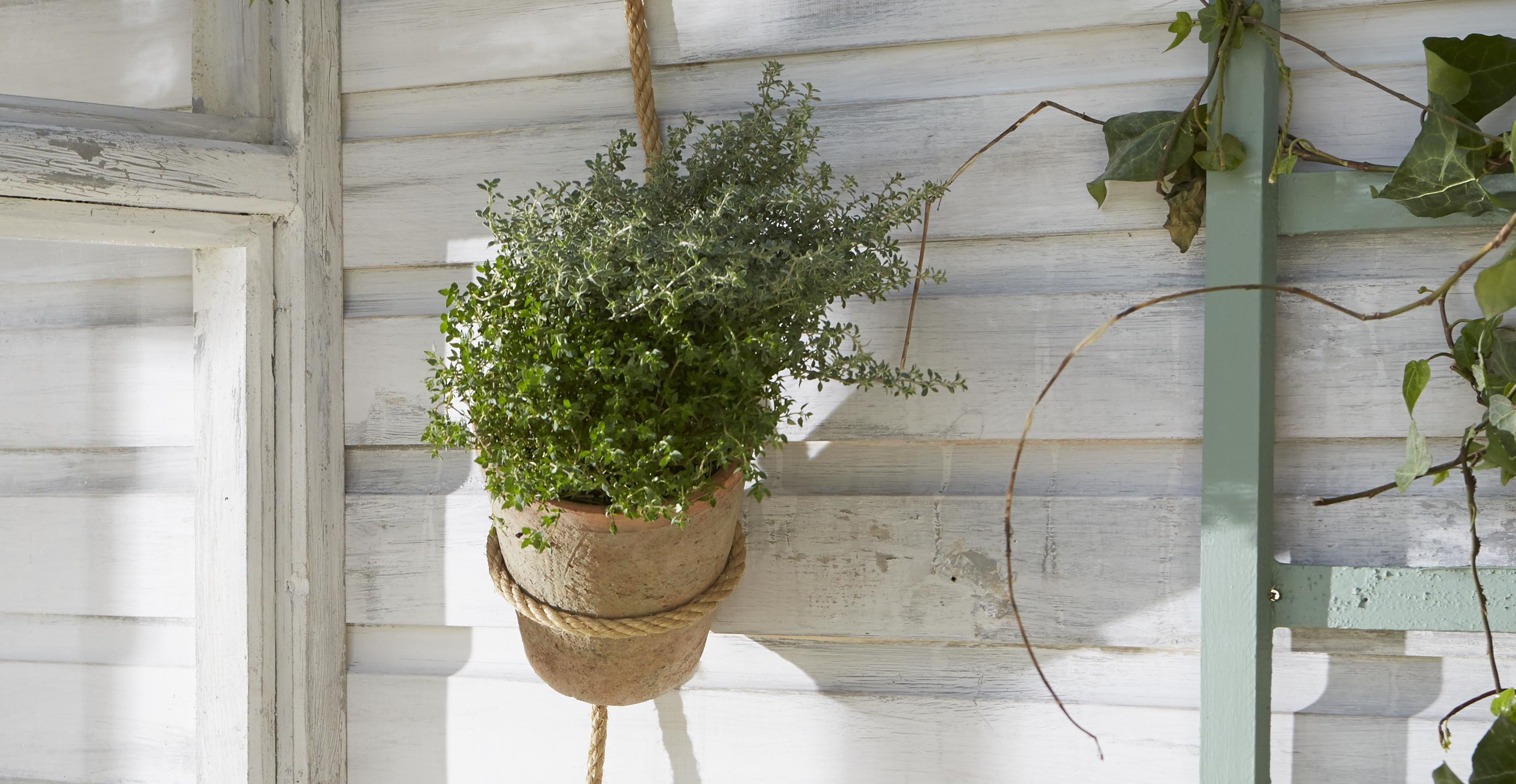 herb hanging basket