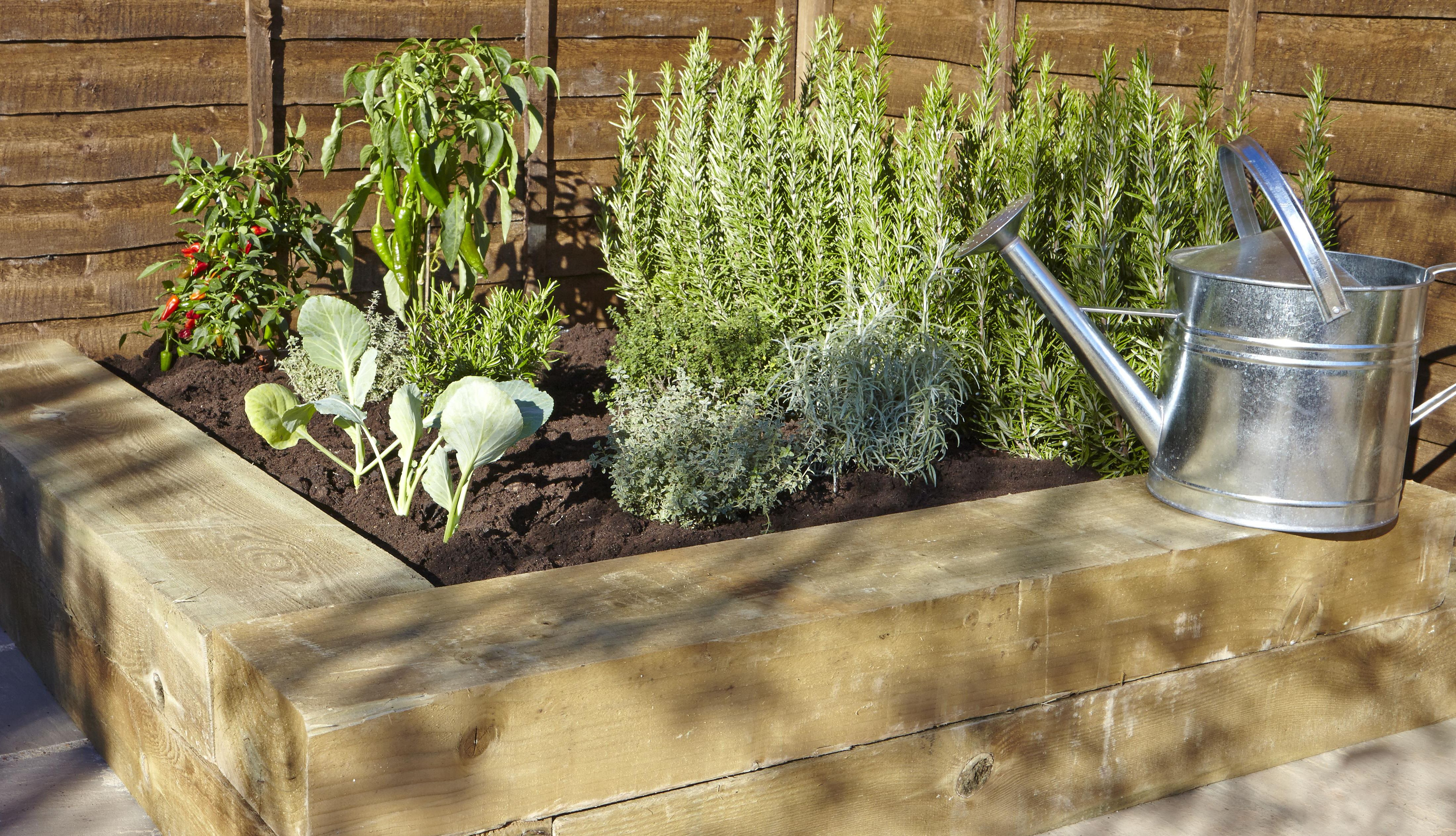 vegetable patch with watering can
