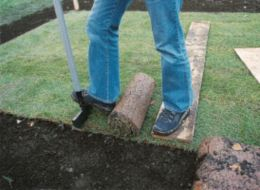 cutting turf to size with an edger