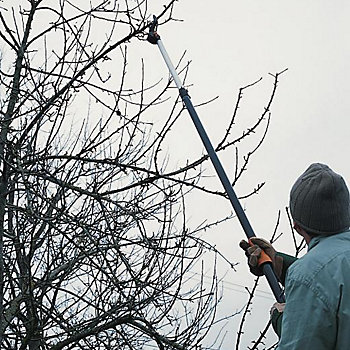man using loppers to prune fruit tree