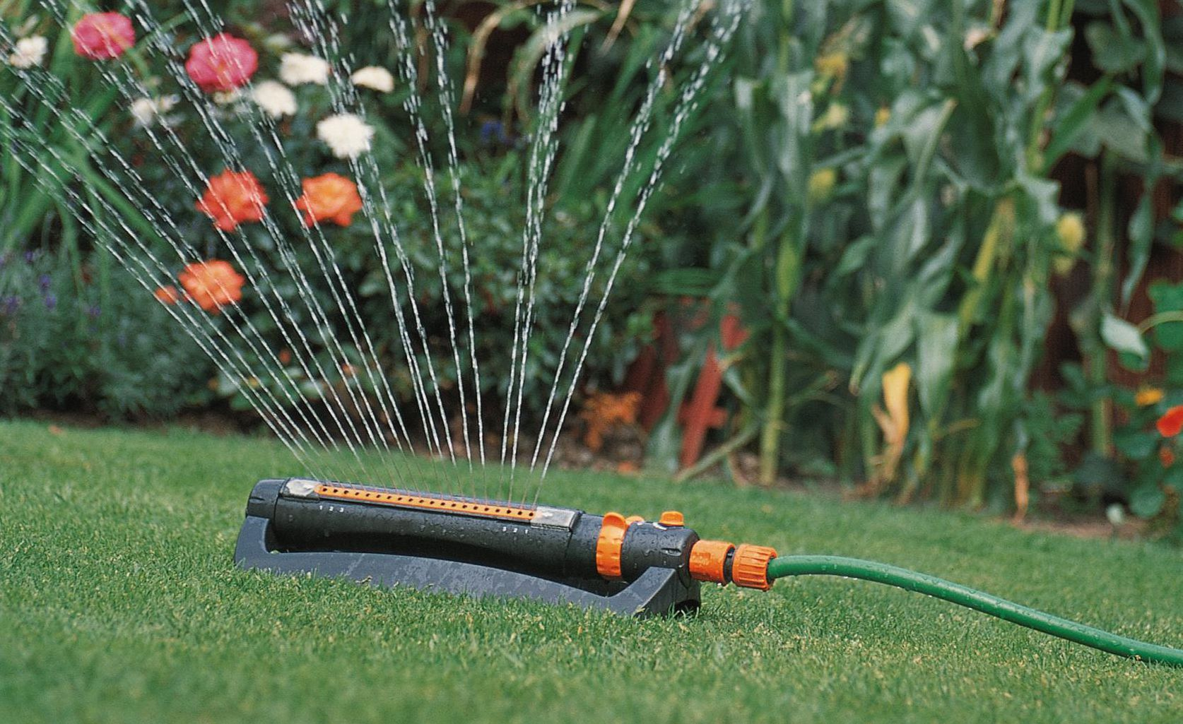 lawn with sprinkler