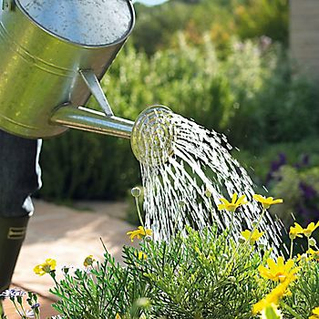 stainless steel watering can watering plants