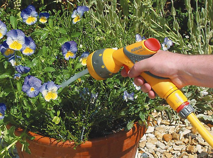 watering bedding plants