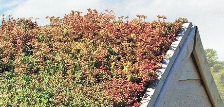 Living Roof Diy At B Amp Q