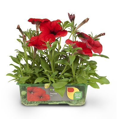 9 pack bedding plants 4 for €12 (from €4.05 each)