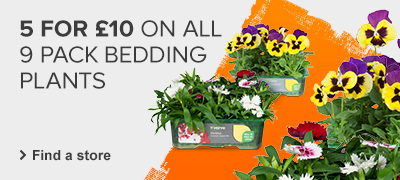 5 for 10 on all 9 pack bedding plants
