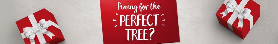 Pining for the perfect tree?