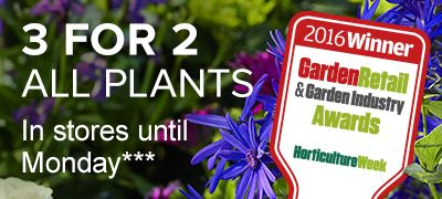 3 for 2 on all plants, in store until Monday