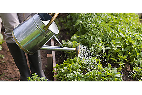Watering can in vegetable garden