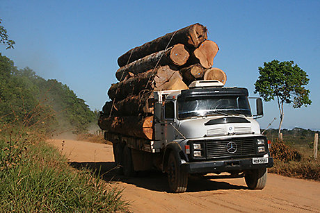 Timber on truck in Brazil