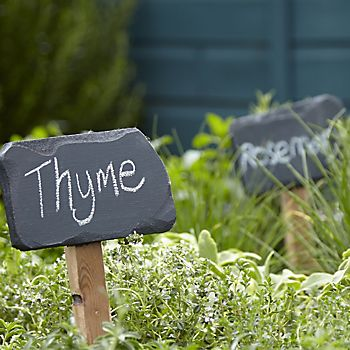 Thyme and rosemary labelled in a herb garden