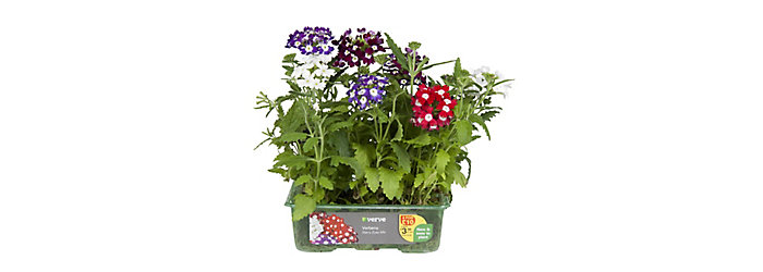 easyGrow plants in packaging