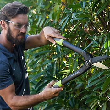 Man pruning hedge
