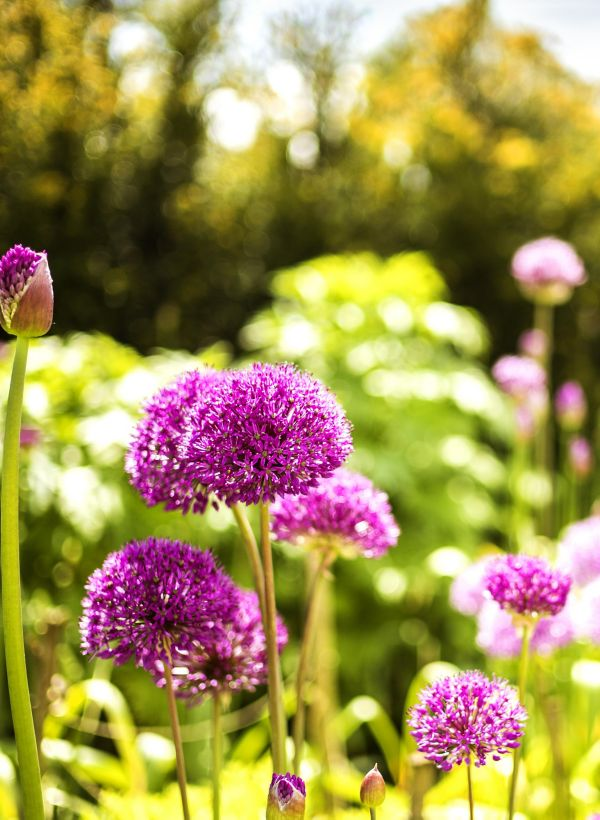 How to care for the garden in hot weather