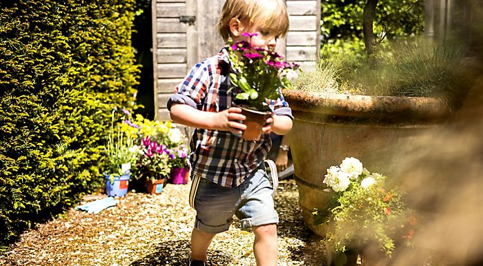little boy with garden bedding plants