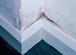 fix damp patch on wall. Black Bedroom Furniture Sets. Home Design Ideas