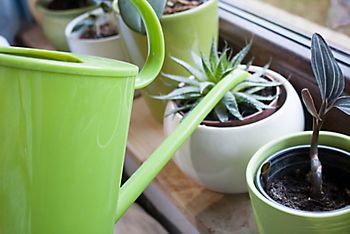 watering caring for houseplants