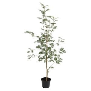 View Sorbus Aucuparia Ornamental Tree (H)10M details