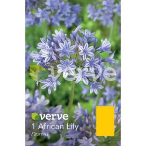 Image of African lily Donau Bulbs