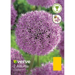 Image of Allium Gladiator Bulbs