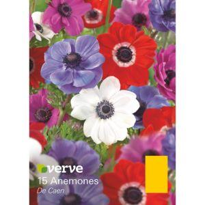 Image of Anemones De caen Bulbs