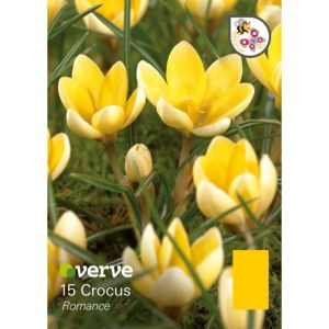 Image of Crocus Chrysanthus romance Bulbs