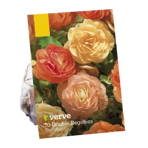 Image of Begonia double pastel mix Flower bulb