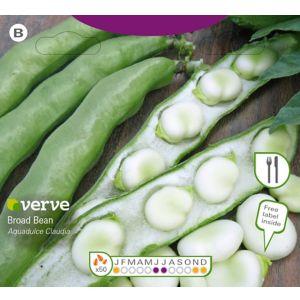 Image of Aqua Dulce Claudia broad bean Seed