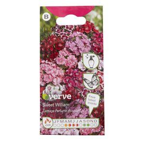 Image of Cottage Perfume Sweet william Seed