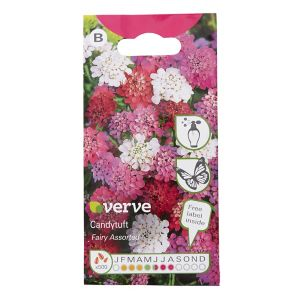 Image of Candytuft fairy Seed