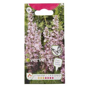 Image of Purple mix Salvia Seed