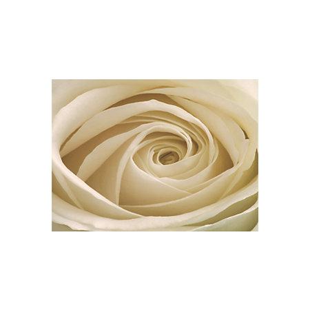 Cream rose flower wallpaper mural departments tradepoint for Cream rose wallpaper