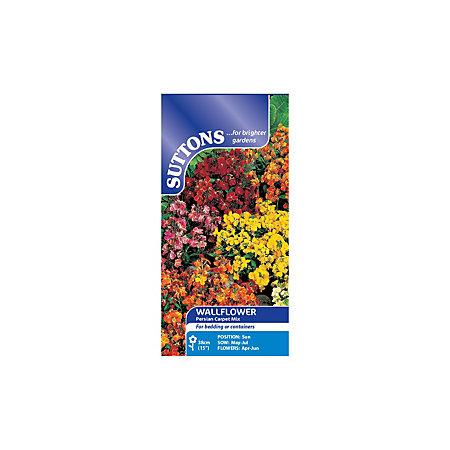 persian carpet template suttons wallflower seeds persian carpet mix departments diy