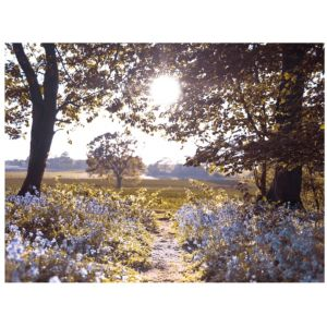 View Bluebell Landscape Multicolour Wall Art (W)80cm x (H)60cm details