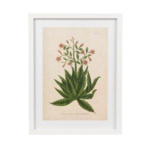 Image of Botanica serrata White Framed art (W)330mm (H)430mm