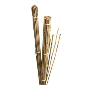 View Gardman Bamboo Canes (W)50mm (H)1.22m details