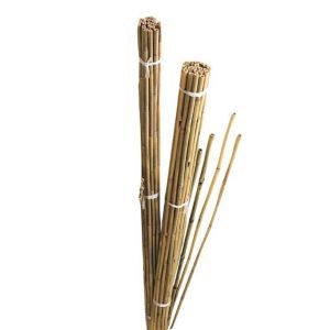 View Gardman Bamboo Canes (W)55mm (H)1.84m details