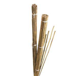 Image of Gardman Bamboo Canes (W)55mm (H)2.43m
