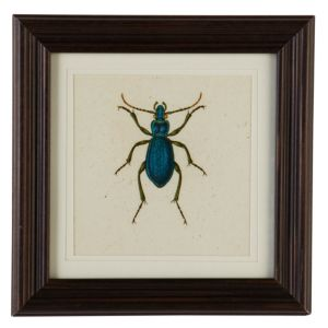 View Beetle Brown & Blue Framed Print (W)257mm x (H)257mm details