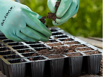 sowing tomato seeds in seed tray