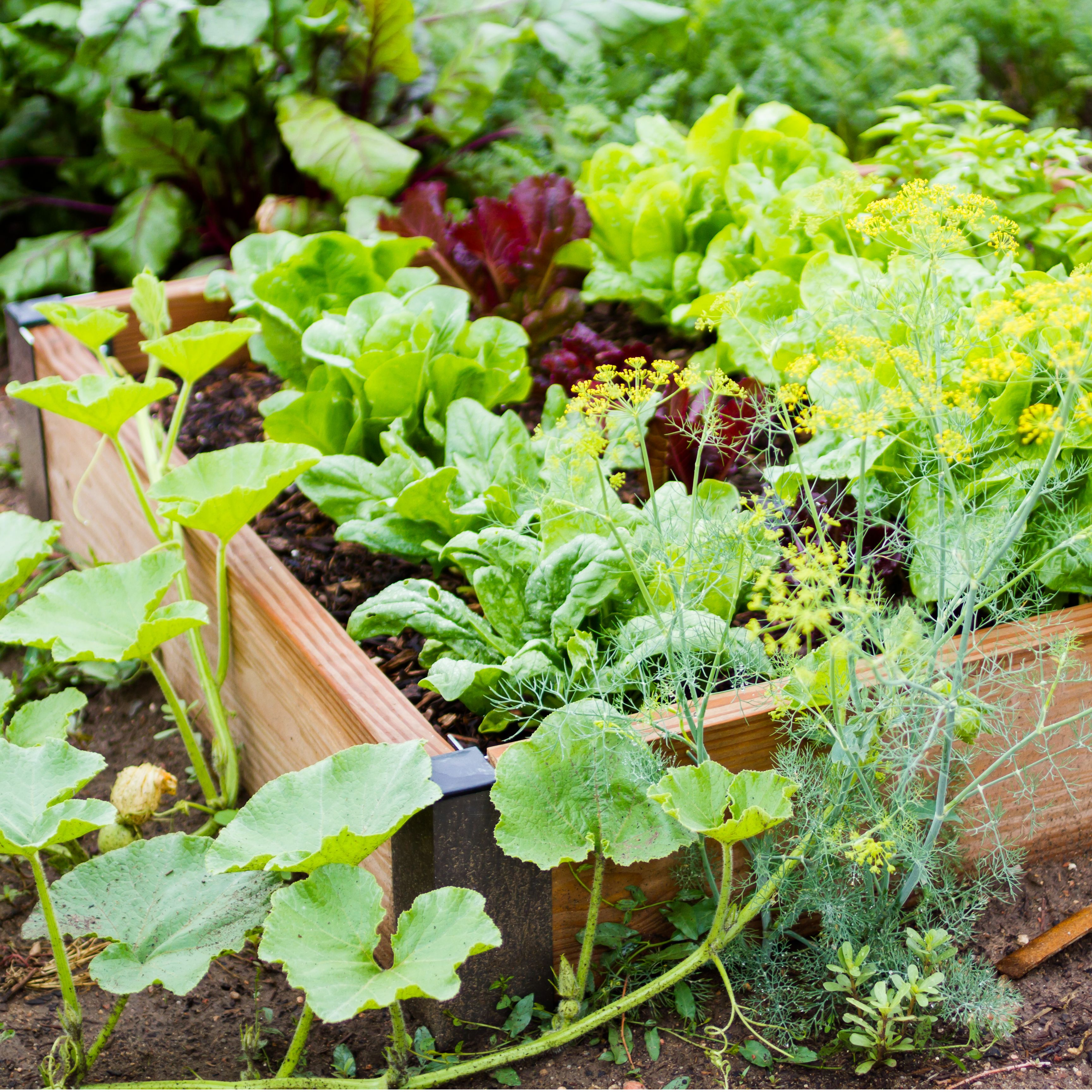 Creating Our First Vegetable Garden Advice Please: How To Ready Your Garden For Growing Fruit And Vegetables