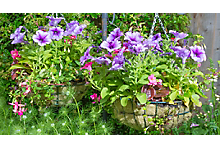 How to plant a hanging basket