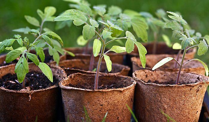 """""""Growing seedlings"""""""
