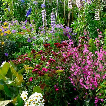 Colourful flower bed in the cottage garden
