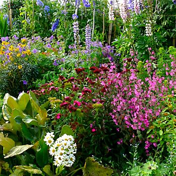 Large garden with tall flowers in beds